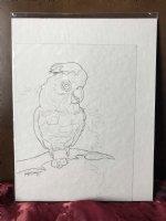 Chubby Cockatoo sketch prelim Comic Art