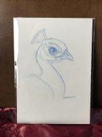 Peacock prelim sketch Comic Art