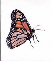 Butterfly mini painting Comic Art