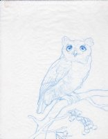 Screech Owl in Winter prelim sketch Comic Art