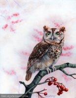 Screech Owl in Winter Comic Art