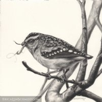 Spotted Pardalote Comic Art
